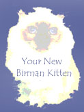 Click HERE to read an excellent article written by our friend Cyndee Myers about your new Birman kitten!